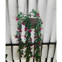 Daftar harga Artificial Bunga Rambat Priti Dengan Vas Gantung Bulan ... d9797a0dd5