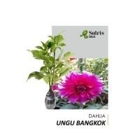 Daftar Harga Bibit Bunga Dahlia Ungu Bulan November 2020